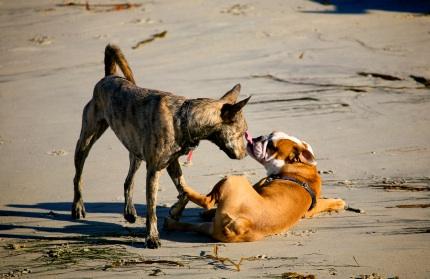 Dominante En Busca De Perros Sumisos 7354